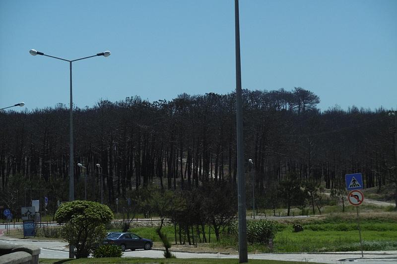BdS ehem staatlich geschütze Wälder vor der Tür