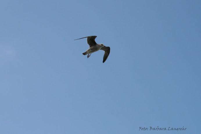 """Im Flug """"erwischt"""" - am Cabo da Roca"""
